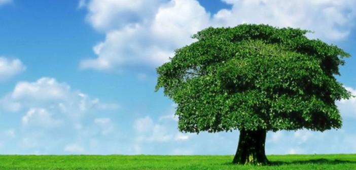 Master Uninform in Sistemi di Gestione Aziendale, Qualità, Ambiente, Energia, Sicurezza: 64^edizione